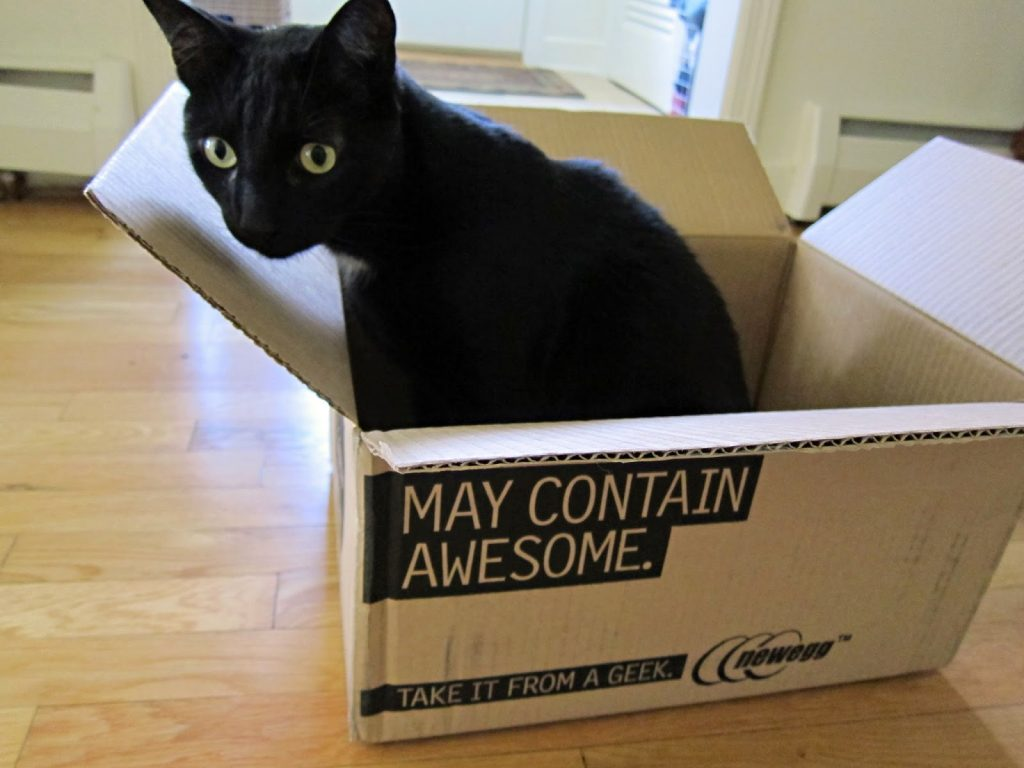 "Black cat in box that says, ""May contain AWESOME"""